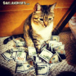 cat with a lot of money