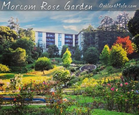 morcom rose garden oakland