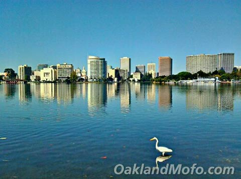 photo of a great egret at lake merritt