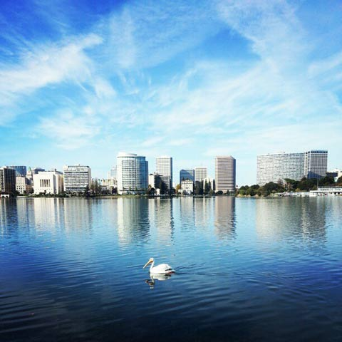 white pelican and the essex on the lake merritt skyline